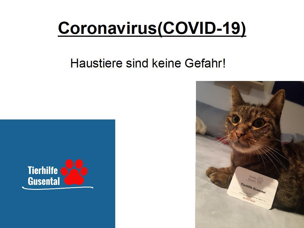 Coronavirus COVID-19 und Tiere