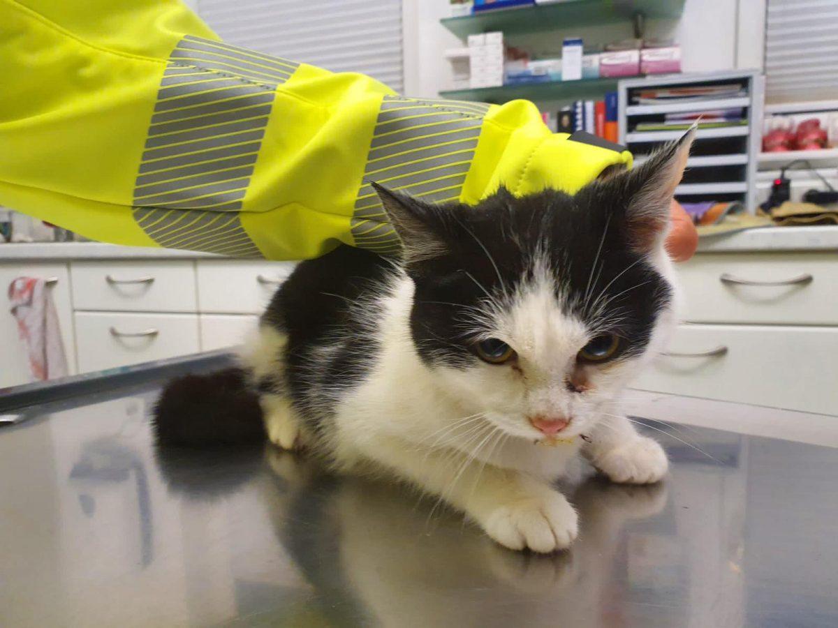 Katzennotfall Zinngießing