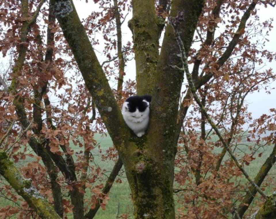 Katzenrettung Weißkirchen an der Traun