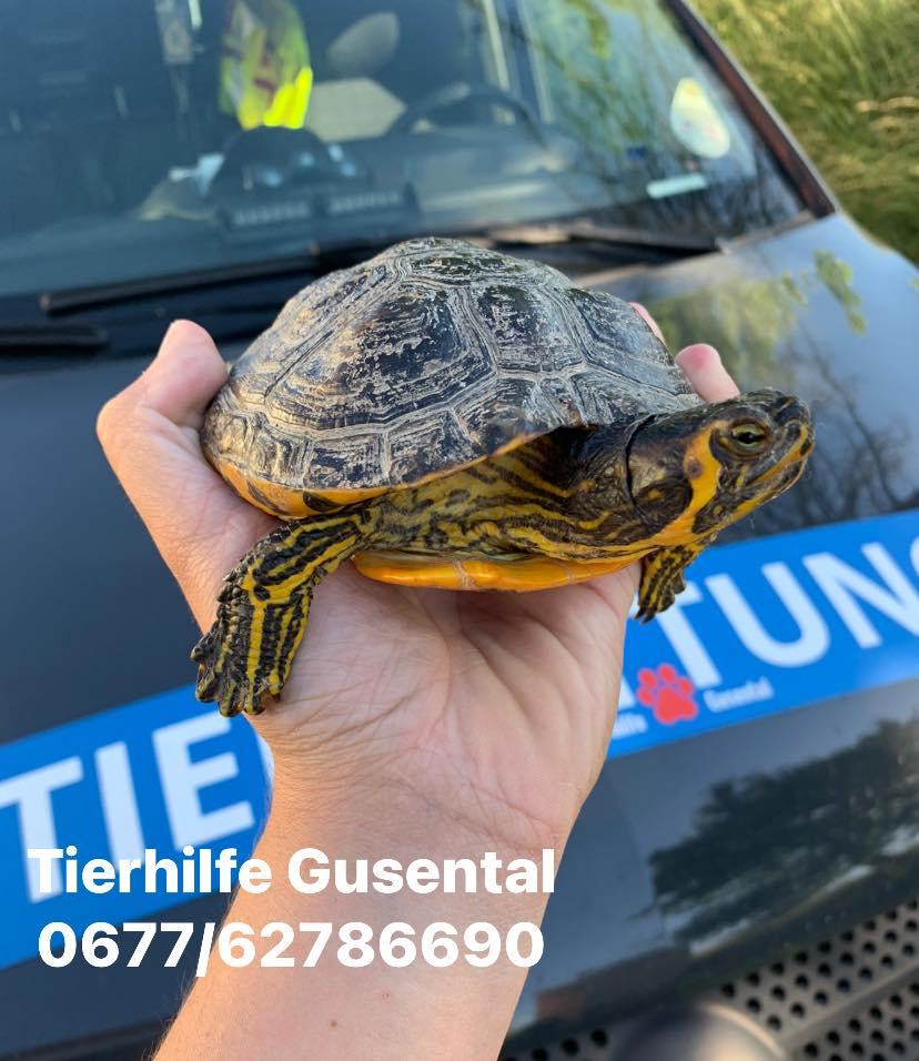 Schildkröte Schleißheim